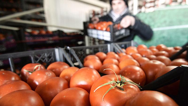 Республика Беларусь стала лидером позакупкам турецких помидоров