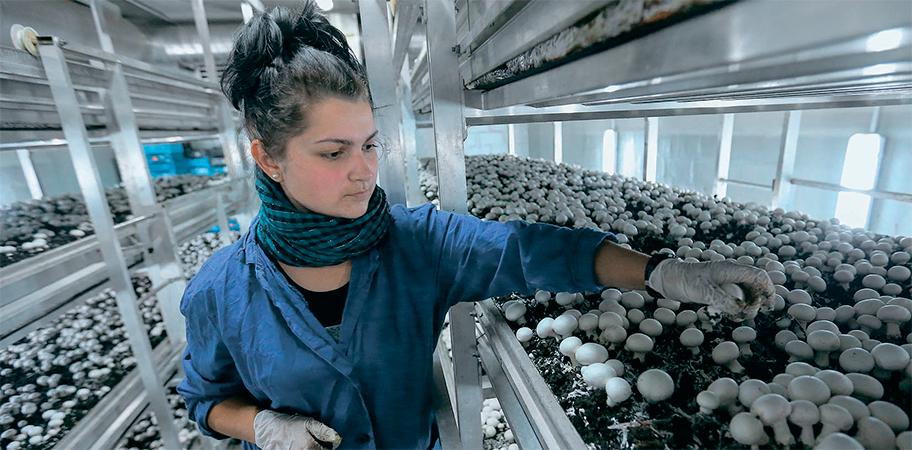 Предприятия по выращиванию грибов в 330